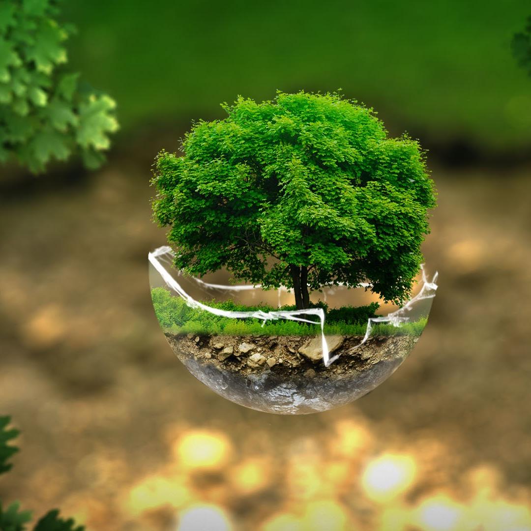 EDR – Environmental Dispute Resolution, czyli co w trawie piszczy